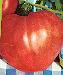 photo-tomate-couer -de-bouef-rouge